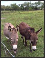 donkey sitting